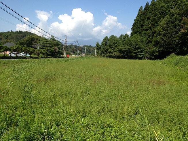 2013-09-21-ビオトープづくり1